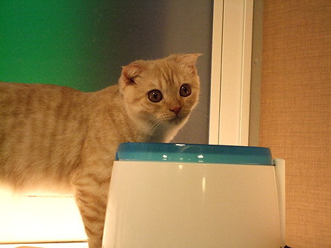 cat_01.jpg