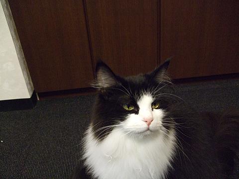 cat_03.jpg