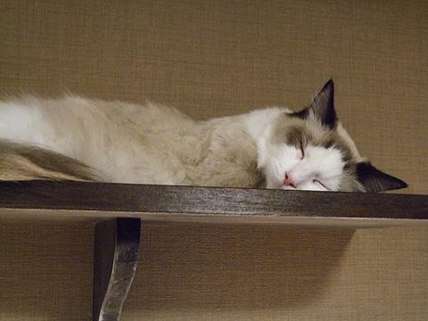 cat_05.jpg