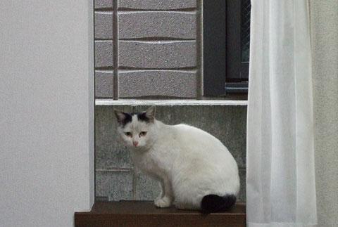 oyaneko_01.jpg